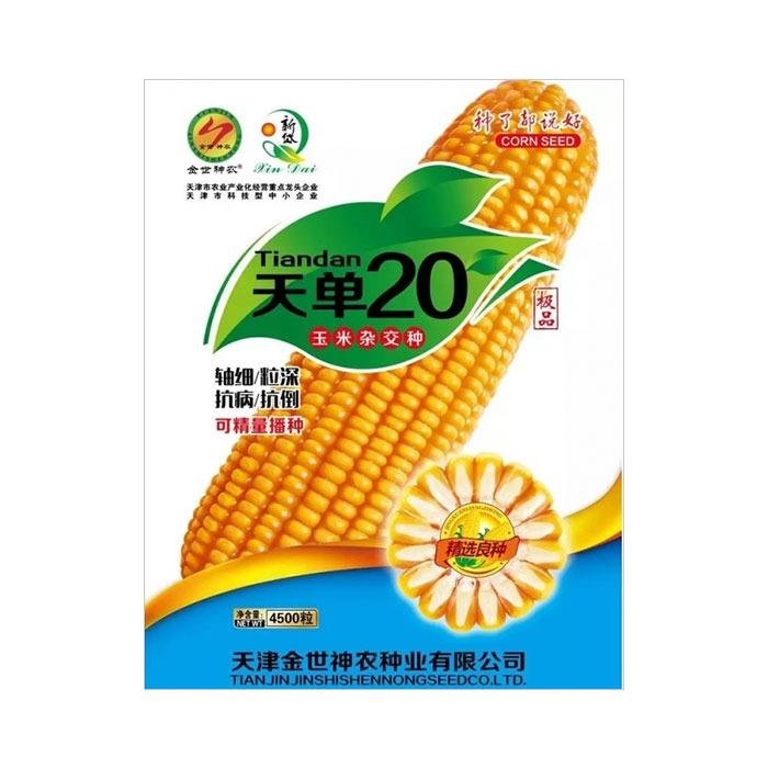 天单20玉米杂交种
