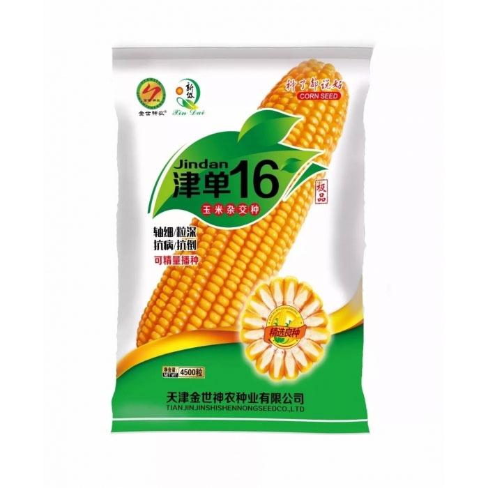 津单16玉米杂交种