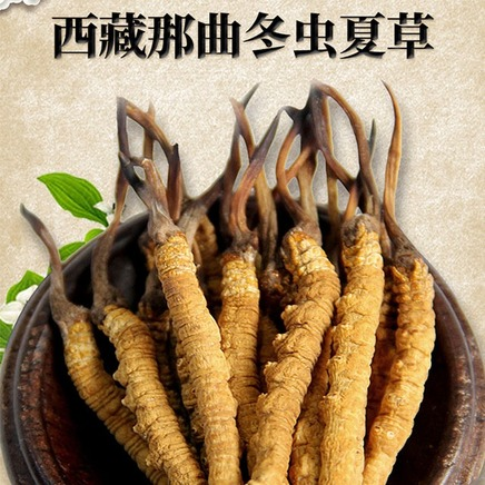 西藏那曲野生虫草正品