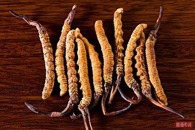 如何吃冬虫夏草才能将冬虫夏草的功效完美发挥?