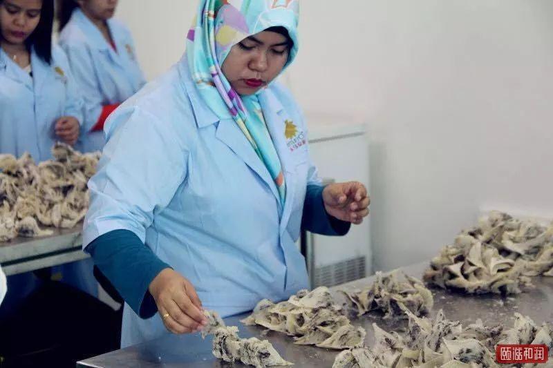 柬埔寨燕窝商人希望政府加快对中国出口