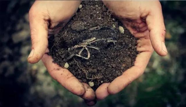 科学养护施肥