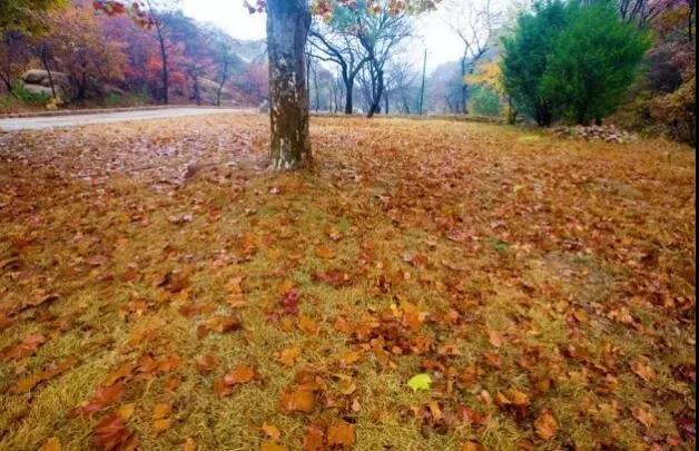 落叶改良土壤
