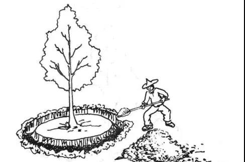 环状沟施肥
