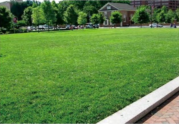 草坪里是否可以使用封闭除草剂