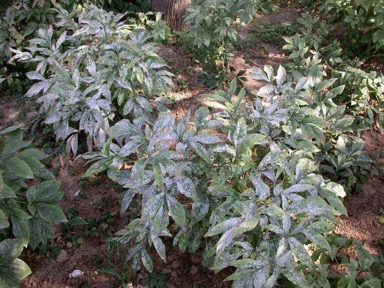园林常见虫害防治措施