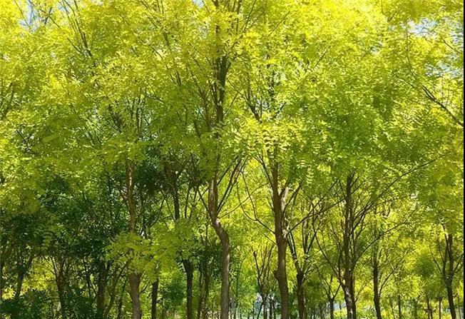 园林农药哪些是对苗木有害的呢?