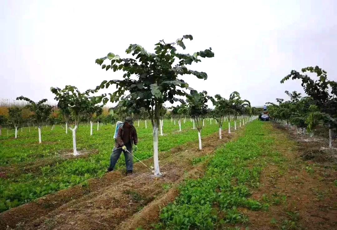 冬季植物保护:选择清园,园林病虫害少