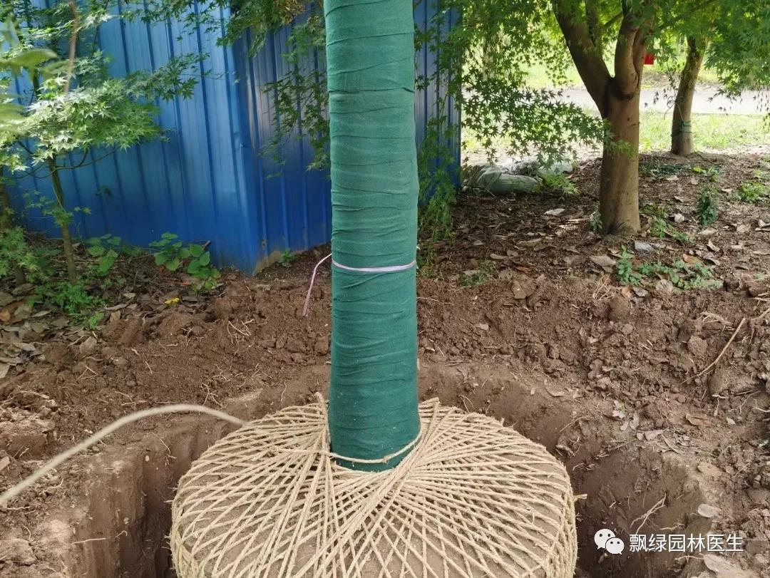 绿化管护技术:苗木如何过冬?