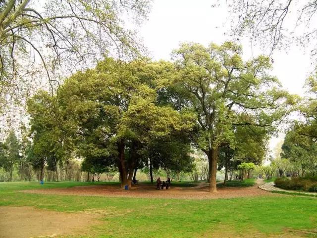 飘绿园林专用除草剂使用技术详解
