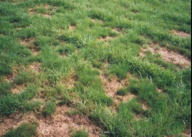 园林除草剂之针对苗木地杂草封闭剂的使用规范