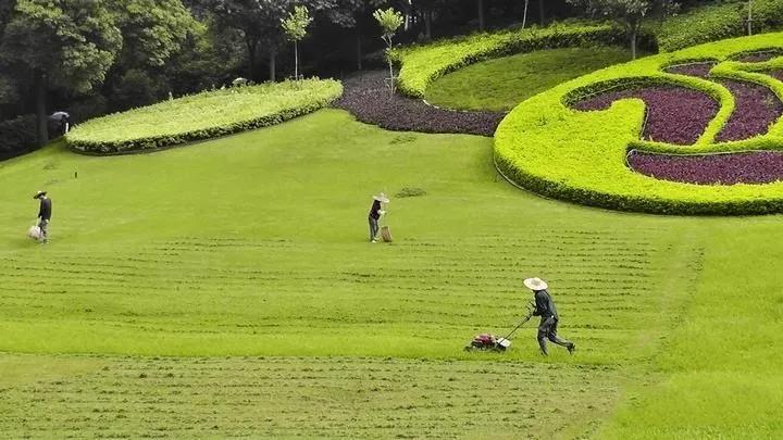 园林肥料:园林植物养护之植物修剪