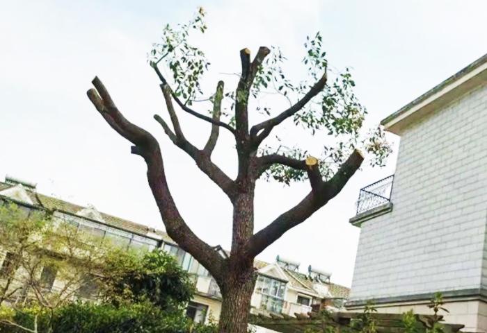 树木伤口处理