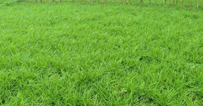 园林杂草防除