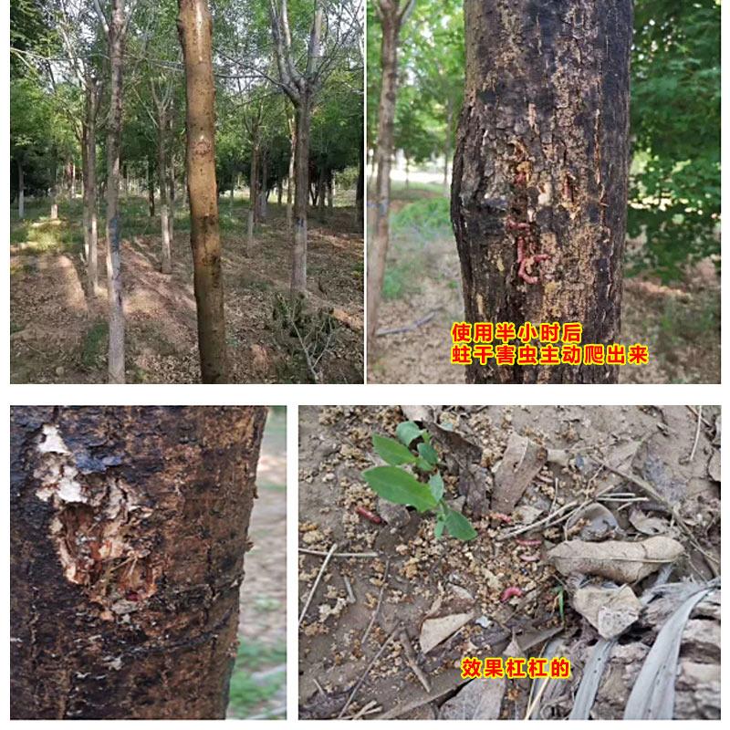 【园林虫害防治】蛀干害虫,用它半小时见效!