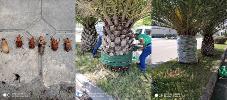 树干害虫4