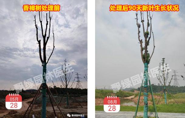 园林树木救治