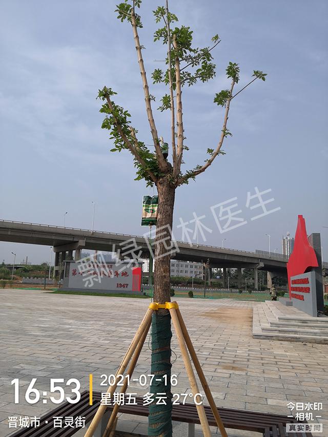 树木回芽怎么救治?