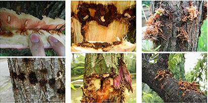 园林病虫害树木防治措施