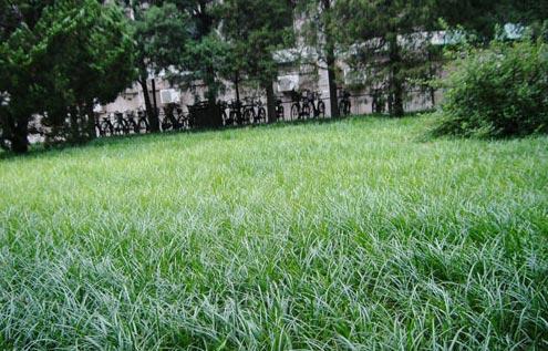 草坪除草剂发生药害应该如何救治?