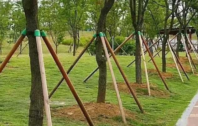 新移栽树木如何安全越冬?