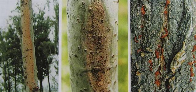 园林绿化树木病虫害成因分析