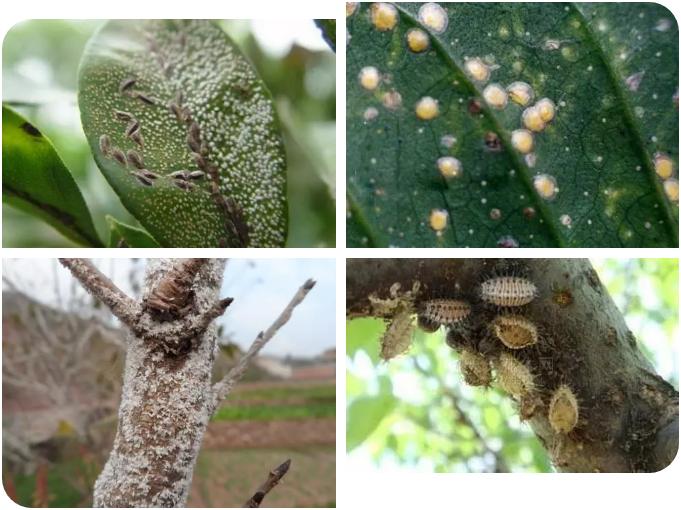 春季花卉常见病虫害与防治