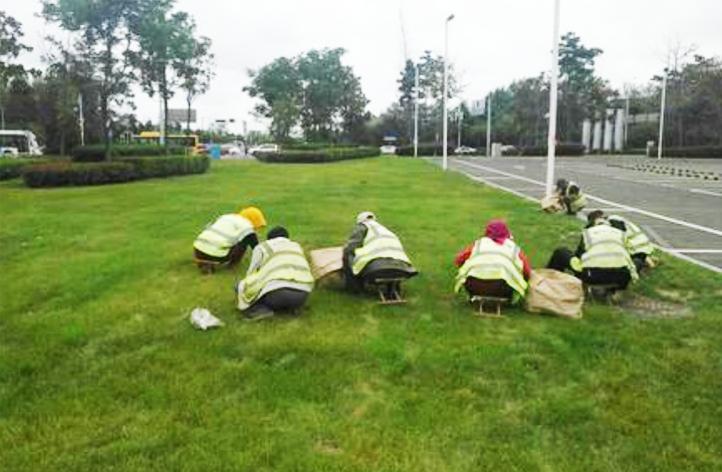 草坪杂除草剂