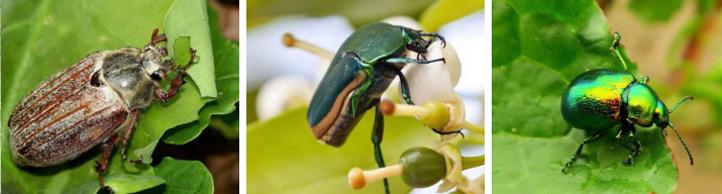 夏季常见园林病虫害防治措施【图】