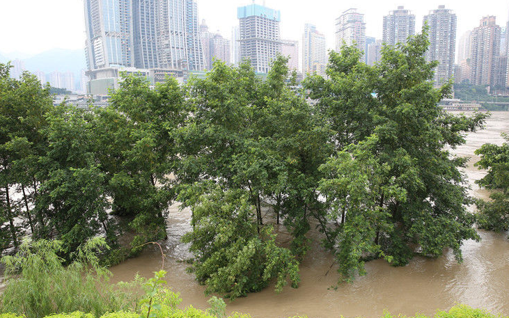 水灾后苗木救治技术指南