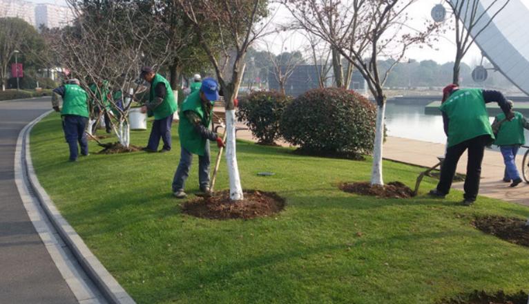 园林绿化苗木养护心得