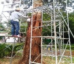 2海口市古树名木健康评估及复壮救治1