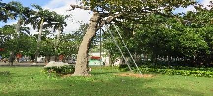 2海口市古树名木健康评估及复壮救治3