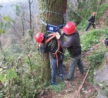 3湖南苏仙岭公园古树健康评估及修复1