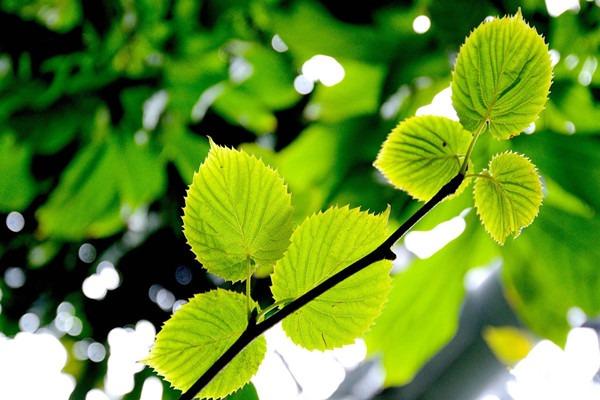 一月份园林植物养护管理技术要点