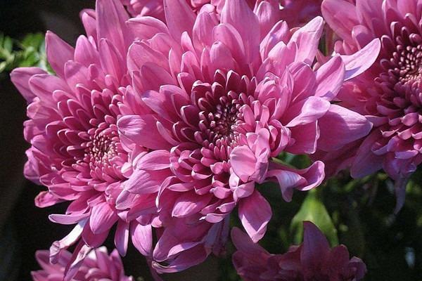 植物养护管理:家庭花卉春季养护要点