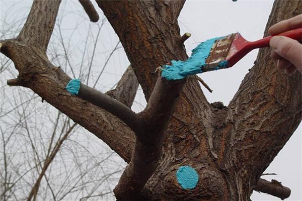 古树养护工程:秋冬季节树木修剪方式