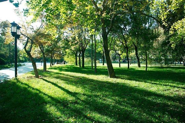 古树公园设计:园林绿化养护六个有效措施