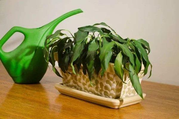 古树复壮:植物萎蔫后的养护和复壮