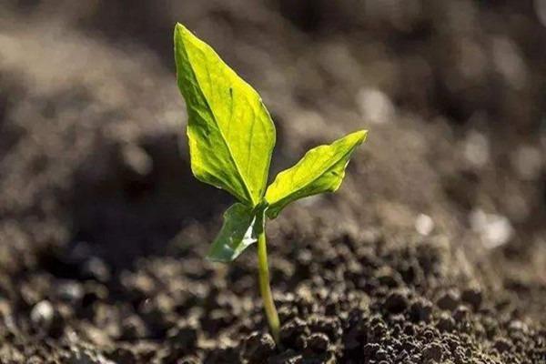 古树土壤改良:土壤改良,你就从这四个方面下手