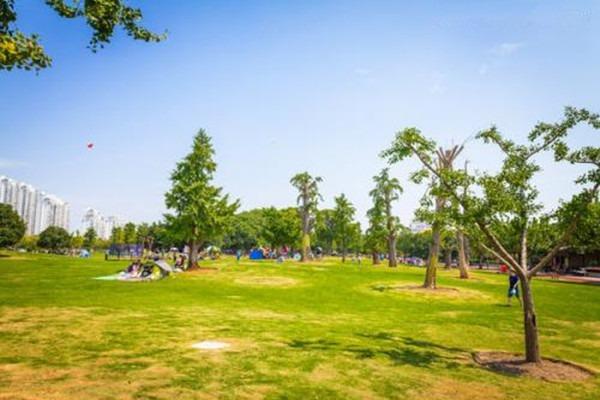 古树养护工程:三月园林养护要点