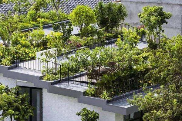 古树公园设计:如何维护精致的屋顶花园