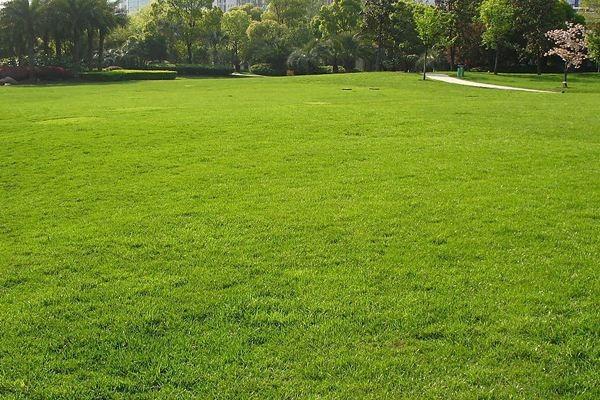 让植物更有活力的绿化养护技巧