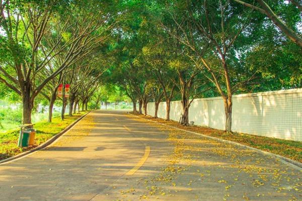 古树公园设计:校园园林绿化养护应该如何做