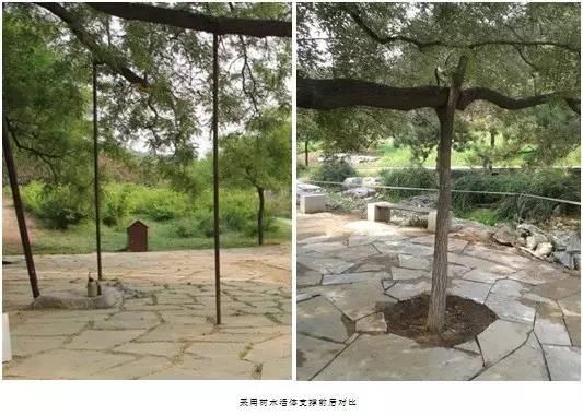 树木活体支撑