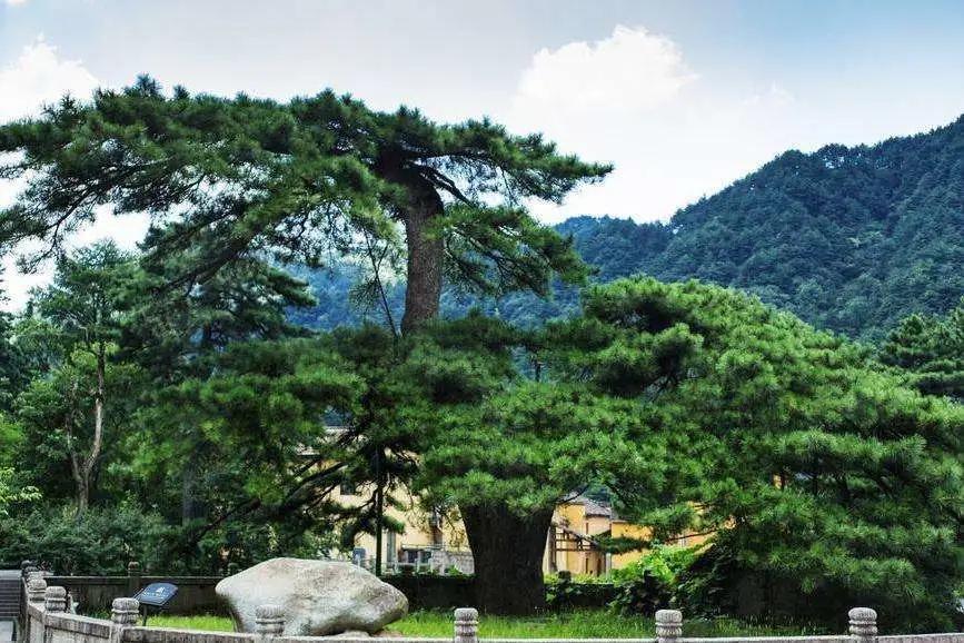 名贵树木养护施肥要求有哪些呢?