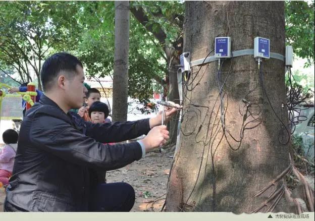 名木古树复壮中修剪原则有哪些
