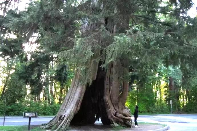 名木古树土壤改良满足生长所需