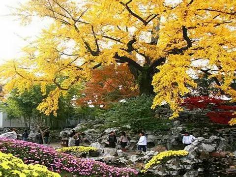 古树养护管理在城市绿化中的作用