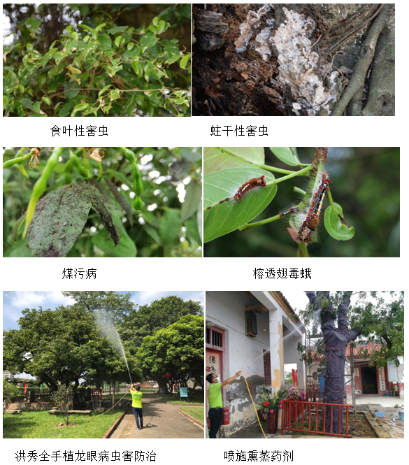 古树复壮虫害防治
